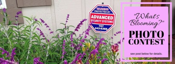 "Advanced Security Systems launches ""What's Blooming?"" Photo Contest"