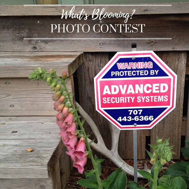 """What's Blooming?"" Photo Contest ends in 5 days!"